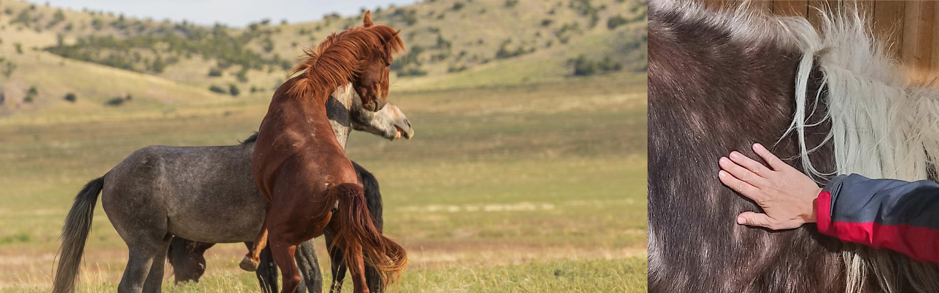 Heilpraxis für Pferde